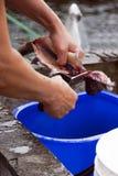 Het schoonmaken vissen Stock Foto