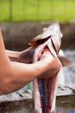 Het schoonmaken vissen Royalty-vrije Stock Afbeeldingen