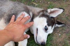 Het schor puppy spelen met eigenaar royalty-vrije stock fotografie