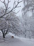 Het schor spelen in de sneeuw Stock Afbeeldingen