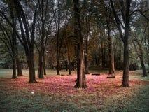 Het schot van een cirkel van bomen en banken met een rood verlaat vloer stock fotografie