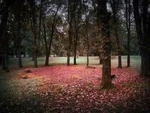 Het schot van een cirkel van bomen en banken met een rood verlaat vloer royalty-vrije stock afbeeldingen