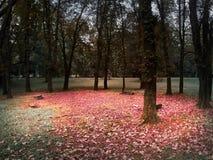 Het schot van een cirkel van bomen en banken met een rood verlaat vloer stock afbeeldingen