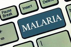 Het schrijven nota die Malaria tonen Bedrijfsfoto die Levensgevaarlijke gedragen mug demonstreren de Periodes van de bloedziekte  stock afbeeldingen