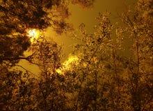 Het schroeien de zomerochtend Zon, wolken en bos Hoge luchttemperatuur rust Geen een daling van water rond stock fotografie