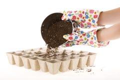 Het schudden van Grond in de Milieuvriendelijke Potten van het Compost Royalty-vrije Stock Foto