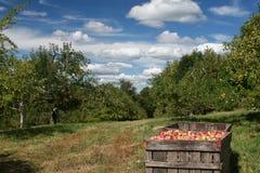 Het Seizoen van de appel Stock Foto
