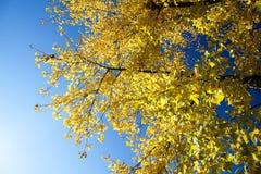 Het seizoen van de herfst Weg in dalingsbos Stock Foto