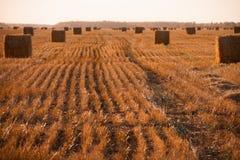 Het seizoen van de herfst Weg in dalingsbos Royalty-vrije Stock Foto