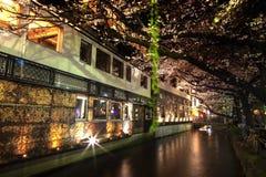 Het seizoen van de de kersenbloesem van Japan in Kyoto begin Maart elk jaar, Japan royalty-vrije stock afbeelding