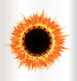 Het seizoen van de zonnebloemherfst Stock Afbeelding
