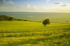 Het Siciliaanse landschap stock fotografie