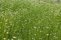 Het sierlijke Gebied van Wildflower en van het Gras Royalty-vrije Stock Foto