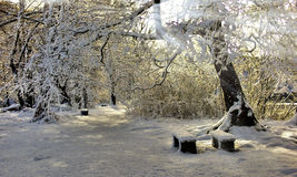 Het sijpelen in Warmte van de Winterzon Stock Foto