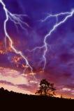 Het silhouet en de bliksem van de boom Stock Afbeelding