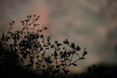 Het Silhouet van bergbloemen op een Vage Achtergrond Stock Foto's