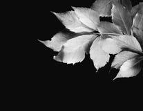 Het Silhouet van bladeren Royalty-vrije Stock Fotografie