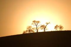 Het silhouet van bomen bij zonsondergang Royalty-vrije Stock Afbeelding