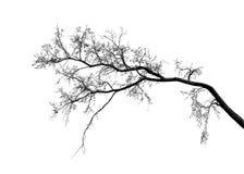 Het silhouet van boomtakken over witte achtergrond Royalty-vrije Stock Foto