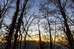 Het silhouet van boomtakken tegen zonsondergangachtergrond stock foto