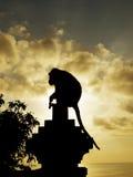 Het silhouet van de aap Stock Afbeelding