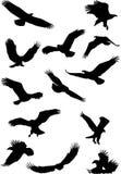 Het silhouet van de adelaar Royalty-vrije Stock Afbeelding