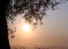 Het silhouet van de boom Stock Afbeelding
