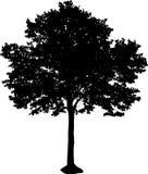 Het silhouet van de boom Stock Foto