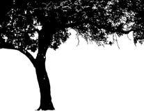 Het silhouet van de boom Stock Foto's