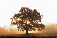 Het silhouet van de boom