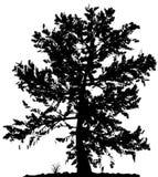 Het silhouet van de boom. Royalty-vrije Stock Fotografie