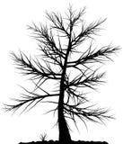 Het silhouet van de boom. Royalty-vrije Stock Afbeeldingen