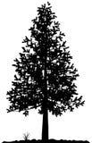 Het silhouet van de boom. Stock Afbeelding