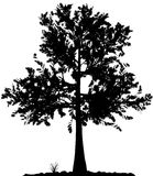 Het silhouet van de boom. Royalty-vrije Stock Afbeelding