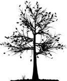 Het silhouet van de boom. Stock Foto