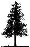 Het silhouet van de boom. Stock Foto's
