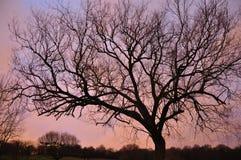 Het silhouet van de boom Royalty-vrije Stock Afbeeldingen