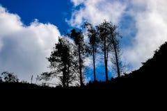 Het silhouet van de boom Royalty-vrije Stock Foto's