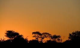 Het silhouet van de boom bij zonsondergang Stock Foto's