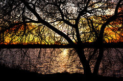 Het silhouet van de boom bij zonsondergang royalty-vrije stock afbeeldingen