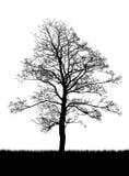 Het silhouet van de boom dat op wit wordt geïsoleerdn royalty-vrije illustratie