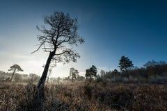 Winters landschap Royalty-vrije Stock Afbeeldingen