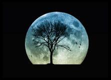 Het silhouet van de boom en de Maan Stock Foto
