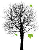Het silhouet van de boom met bladeren stock illustratie