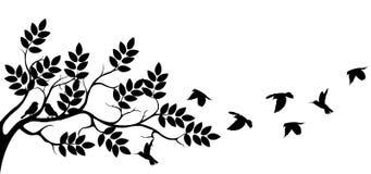 Het silhouet van de boom met vogel het vliegen Stock Foto's