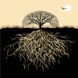 Het silhouet van de boom met wortels Stock Foto's