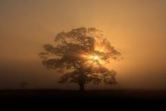 Het silhouet van de boom in mist Royalty-vrije Stock Afbeeldingen