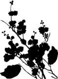 Het silhouet van de boombloemen van de kers Stock Fotografie