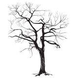 Het silhouet van de boomboomstam met gevallen bladeren Stock Foto