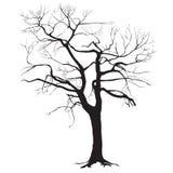 Het silhouet van de boomboomstam zonder bladeren Stock Foto